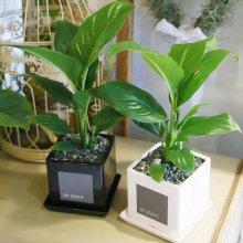 모던 화분 스파트필름 공기정화식물 화이트