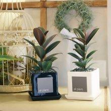 모던 화분 멜라니 고무나무 공기정화식물 화이트