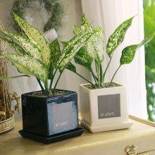 모던 화분 사파이어 공기정화식물 화이트