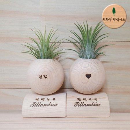 편백나무 미니 틸란드시아 원형 - 2개