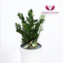 금전수 대형 관엽식물 공기정화 꽃배달