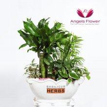 모듬식물 일반형 관엽식물 공기정화 꽃배달