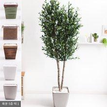 올리브나무화분set 230cm K_M [조화] 사방형:빈티지마야우드화분(28cm) 5-5