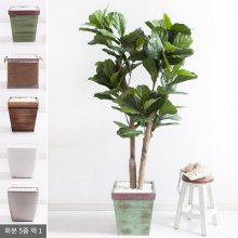 떡갈고무나무화분set 200cm K_M [조화] 사방형:빈티지마야우드화분(28cm) 5-5