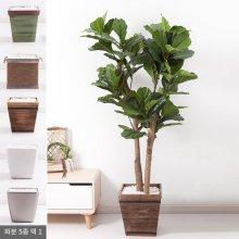 떡갈고무나무화분set 170cm K_M [조화] 사방형:빈티지마야우드화분(28cm) 5-5