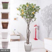 라인-레몬나무화분set 240cm K [조화] 사방형:빈티지마야우드화분(28cm) 5-5