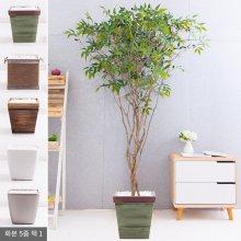 라인-올리브나무화분set 210cm (조화) FREOFT 벽면형:빈티지마야우드화분(28cm) 5-5