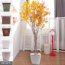 라인-단풍자작나무화분set 240cm (조화) FREOFT 벽면형:빈티지마야우드화분(28cm) 5-5