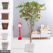 라인-석류나무화분set 210cm (조화) FREOFT 벽면형:빈티지마야우드화분(28cm) 5-5