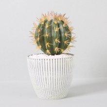 조화 다육식물 다육이 미니화분 금호선인장 22cm(S)