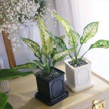 몰딩 화분 스노우 사파이어 공기정화식물 화이트